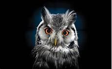 Owl Wallpapers For Desktop owl wallpaper best wallpaper hd for desktop wallpapers13