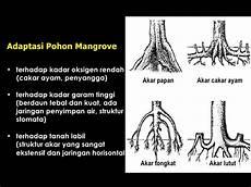Biologi Dasar Ekosistem Mangrove