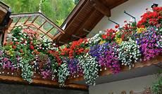 fiori a cascata fiori da balcone pendenti 3 piante a cascata facili da