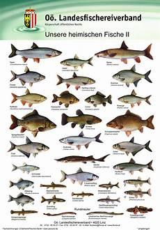 fischarten liste mit bildern fischtafeln set i und ii gro 223 landesfischereiverband o 214