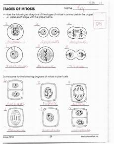 nature s recyclers worksheet answers 15143 mitosis worksheet and diagram identification answer key worksheets diagram cell processes