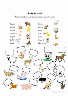 animals and their youngs worksheets 14094 baby animals worksheet free esl printable worksheets made by teachers
