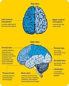 Brain Cancer Diagram by Brain Or Spinal Cord Tumours Cancer Council Nsw