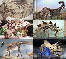 Dino Malvorlagen Bahasa Indonesia Dinosaurus Bahasa Indonesia Ensiklopedia Bebas