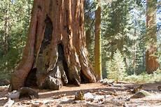 eqoi7a exploring sequoia groves sequoia