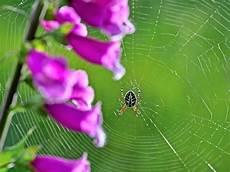 was vertreibt spinnen spinnen vertreiben die besten tipps gegen spinnen im haus