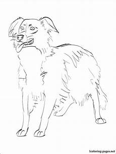 border collie coloring page coloring pages