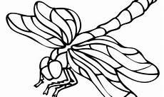 Insekten Ausmalbild Kostenlos Ausmalbilder Insekten Zum Ausdrucken Kostenlos F 252 R
