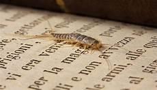 insettini bianchi in casa la paura degli insetti dentro casa chi lo pesa