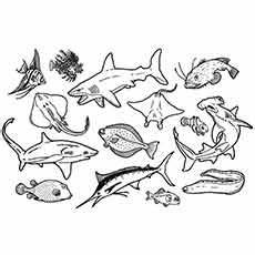 sea animals coloring pages 17500 35 best free printable coloring pages