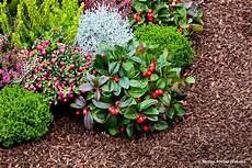 Rindenmulch Im Garten Die Wichtigsten Vorteile Und Nachteile