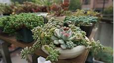 Trailing Succulents That Grow Beautifully In Hanging Pots