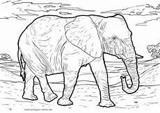 malvorlage elefant tiere kostenlose ausmalbilder
