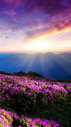 beautiful wallpaper iphone pictures blue mountains beautiful flowers wallpaper free iphone