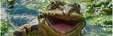 40 photos amusantes d animaux sauvages auxquelles tu ne