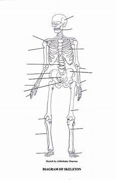 human skeletal system diagram labeled labeled skeletal system diagram bodytomy