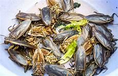 Malvorlagen Insekten Spielen Trolley Tourist Insekten Und Andere Krabbeltiere Essen