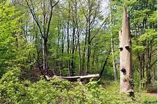projektbeschreibung und ziele speicherwald