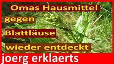 hausmittel gegen blattläuse omas natur hausmittel gegen blattl 228 use bek 228 mpfen