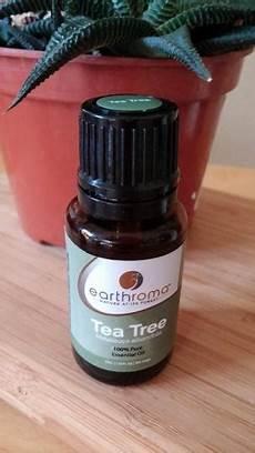 l huile d arbre à thé bienfaits et utilisations de l huile d arbre 224 th 233