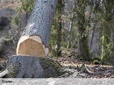 devis elagage arbre elagage d arbre elagueur 224 morcenx t 233 l 05 19 71 05 50