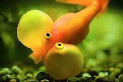 Funny Car Fishing Fish