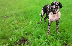 Hunde Vertreiben Hausmittel Tipps Frag Mutti