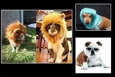 top 10 des accessoires pour animaux le point