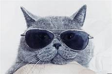 Katze Mit Sonnenbrille - organize your sunglasses by displaying them on a hanger