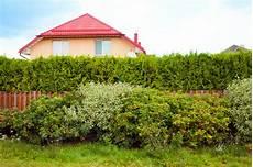 Hohe Sträucher Als Sichtschutz - hohe pflanzen als sichtschutz 187 diese eignen sich hervorragend