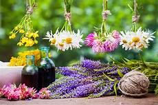 dove si comprano i fiori di bach fiori di bach cosa sono propriet 224 utilizzi e