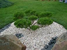d ornement pour jardin niwaki taille apres taille boutures de reves le