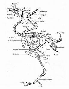 Anatomi Tubuh Hewan Sapi Kesehatan Anda