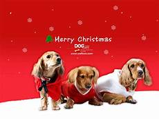 merry christmas images with dogs dontly me