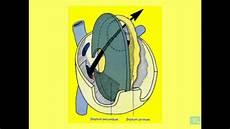appareil cardio embryologie de l appareil cardio vasculaire partie 5