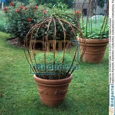 rankhilfe für zimmerpflanzen details zu 0003138431 nat 252 rliche rankhilfe im topf
