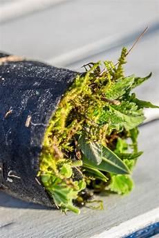 pflanzen im sommer mit stecklingen vermehren ndr de