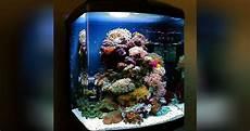 vorstellung der aquarien f 252 r das aquarium des monats
