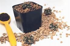 kakteenerde kaufen selber mischen plantura