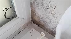 schimmel unter tapete schimmel auf der tapete nicht sichtbar aber daf 252 r risse