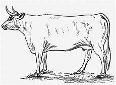 Cow Icons Png Free Gambar Hewan Sapi Hitam Putih