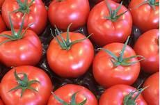 eisen op de tomatenmarkt yara nederland