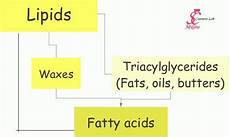 uipi8ds butters fats oils and co part iii swettis