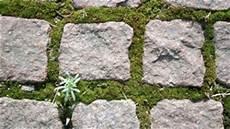 moos steinen entfernen moos entfernen fassade rasen und terrasse vom moos befreien
