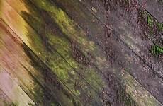 Mittel Gegen Moos Auf Holz Die 5 Besten Tipps