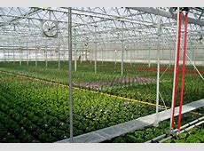 Efficient Greenhouse Irrigation Systems By Rough Brothers Inc