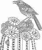 Bird Singing On Cactus Tree Coloring Pages  Best Place To