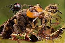 Top 14 Des Insectes Les Plus Dangereux Et Mortels Du Monde