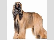 Cute Dogs   Cute Dogs Breeds information   List Cute Dog