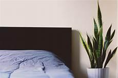 6 Schlaff 246 Rdernde Pflanzen Die Sie In Ihrem Schlafzimmer